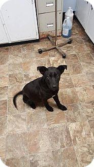 Labrador Retriever Mix Puppy for adoption in Darlington, South Carolina - Usher