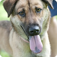 Adopt A Pet :: Miley - Norwalk, CT