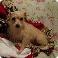 Adopt A Pet :: Cassie - North Bend, WA