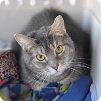 Adopt A Pet :: Carrot - Philadelphia, PA