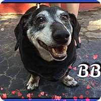 Adopt A Pet :: BB - Green Cove Springs, FL