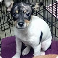 Adopt A Pet :: Baby Doll - Sylacauga, AL