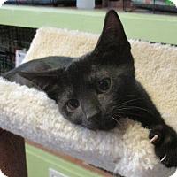 Adopt A Pet :: Sasha - Reeds Spring, MO