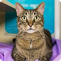 Adopt A Pet :: Bradford - Seville, OH