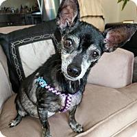 Adopt A Pet :: Delilah - Arlington, VA