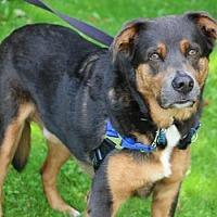 Adopt A Pet :: Banjo - Chester Springs, PA
