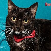 Adopt A Pet :: Domino - San Juan Capistrano, CA