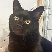 Adopt A Pet :: Bobbie - McPherson, KS