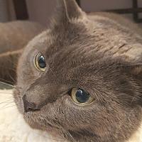 Adopt A Pet :: Tiny - Salisbury, MA