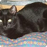 Adopt A Pet :: Ridge - Fort Lauderdale, FL