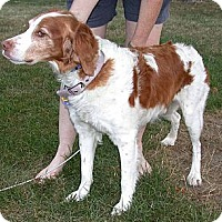Adopt A Pet :: Hutch - Buffalo, NY