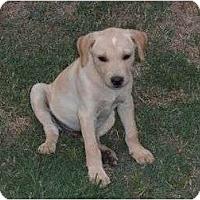 Adopt A Pet :: BamBam - Glastonbury, CT