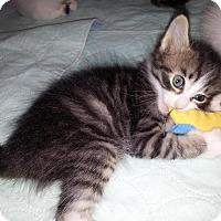 Adopt A Pet :: PaulRevere - Dallas, TX