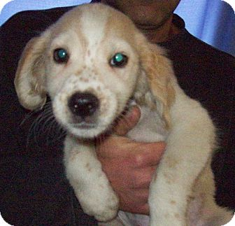 Labrador Retriever Mix Puppy for adoption in Pompton Lakes, New Jersey - Ghost