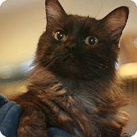 Adopt A Pet :: Prince Harry Raider - Canoga Park, CA