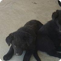Adopt A Pet :: Wonder - San Fernando Valley, CA