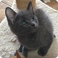 Adopt A Pet :: Beaumont - Encinitas, CA