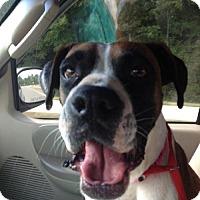 Adopt A Pet :: Tinker - Brentwood, TN