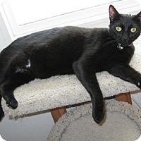 Adopt A Pet :: MonkeyMoon - North Highlands, CA