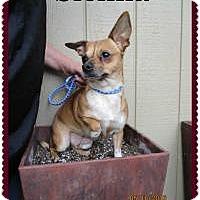 Adopt A Pet :: Sienna - Shawnee Mission, KS