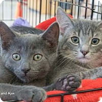 Adopt A Pet :: Ajax - Merrifield, VA