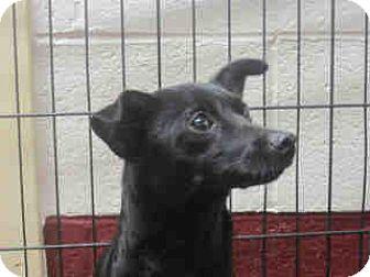 Chihuahua Dog for adoption in Newnan City, Georgia - Minnie