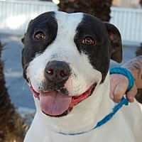Adopt A Pet :: Carly - Las Vegas, NV