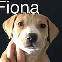 Adopt A Pet :: Fiona - PEORIA, AZ