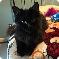 Adopt A Pet :: Jelly Bean - Sterling Hgts, MI