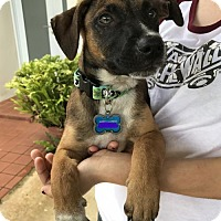 Adopt A Pet :: Cooper - Danbury, CT