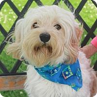 Adopt A Pet :: Petey-PENDING - Garfield Heights, OH