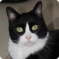 Adopt A Pet :: Aurora - North Branford, CT