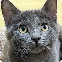 Adopt A Pet :: Miss Scout - Irvine, CA