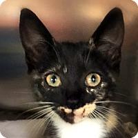 Adopt A Pet :: KELSI - Burlington, NC