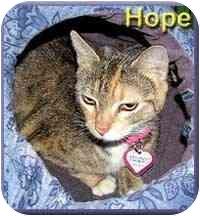 Domestic Shorthair Cat for adoption in Aldie, Virginia - Hope