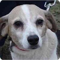 Adopt A Pet :: Lilly - Scotland Neck, NC