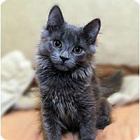 Adopt A Pet :: Sage - Farmingdale, NY