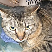 Adopt A Pet :: Handsome - Logan, UT