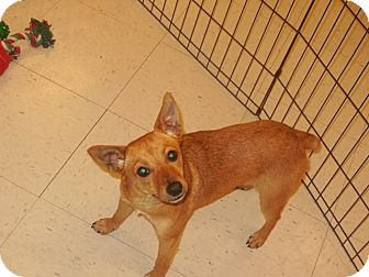 Terrier (Unknown Type, Small) Mix Dog for adoption in DeRidder, Louisiana - Chloe