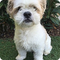 Adopt A Pet :: MIKEY - Rancho Palos Verdes, CA