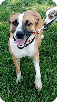 Shepherd (Unknown Type) Mix Dog for adoption in Macomb, Illinois - Rosie