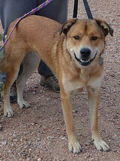Shepherd (Unknown Type) Mix Dog for adoption in Peyton, Colorado - Sadie