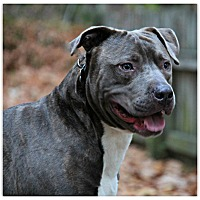 Adopt A Pet :: Bugle - Forked River, NJ