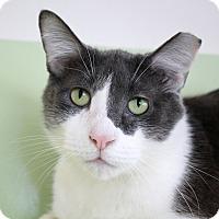 Adopt A Pet :: Tumbler - Chicago, IL