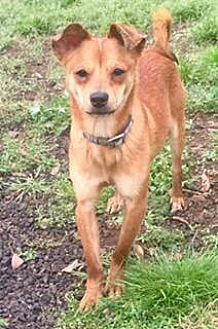 Terrier (Unknown Type, Medium) Mix Dog for adoption in Penngrove, California - Mikey