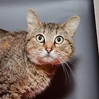 Adopt A Pet :: Thunderstruck - Mission Hills, CA
