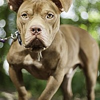 Adopt A Pet :: Waylow - Gainesville, FL