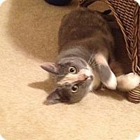 Adopt A Pet :: Dolly - Monroe, NC