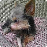 Adopt A Pet :: O'Connor - Dartmouth, MA