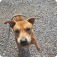 Adopt A Pet :: # 583-13 @ Animal Shelter - Zanesville, OH